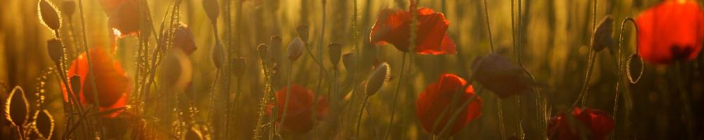cambiar las flores del jardin en verano